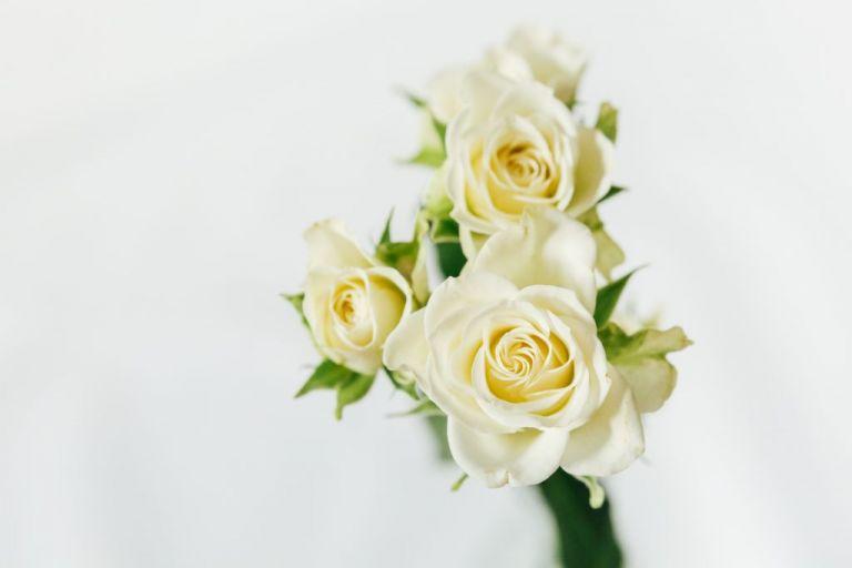 Bouquet de mariée couleurs de l'hiver - Stéphanie Lapierre Photographe Mariage #bouquet #bouquetdemariee #hiver #mariagehiver #fleurs #anémone #inspirationmariage2019 mariage hiver
